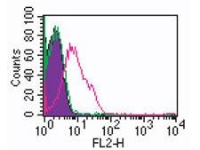 TLR2 Antibody