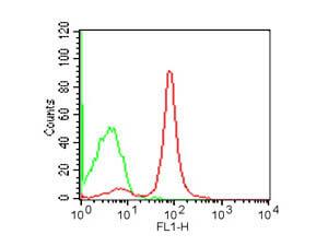 CD19 Fluorescein Antibody