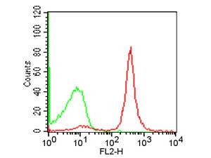 CD19 Phycoerythrin Antibody