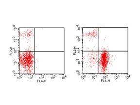 CD19 APC Antibody